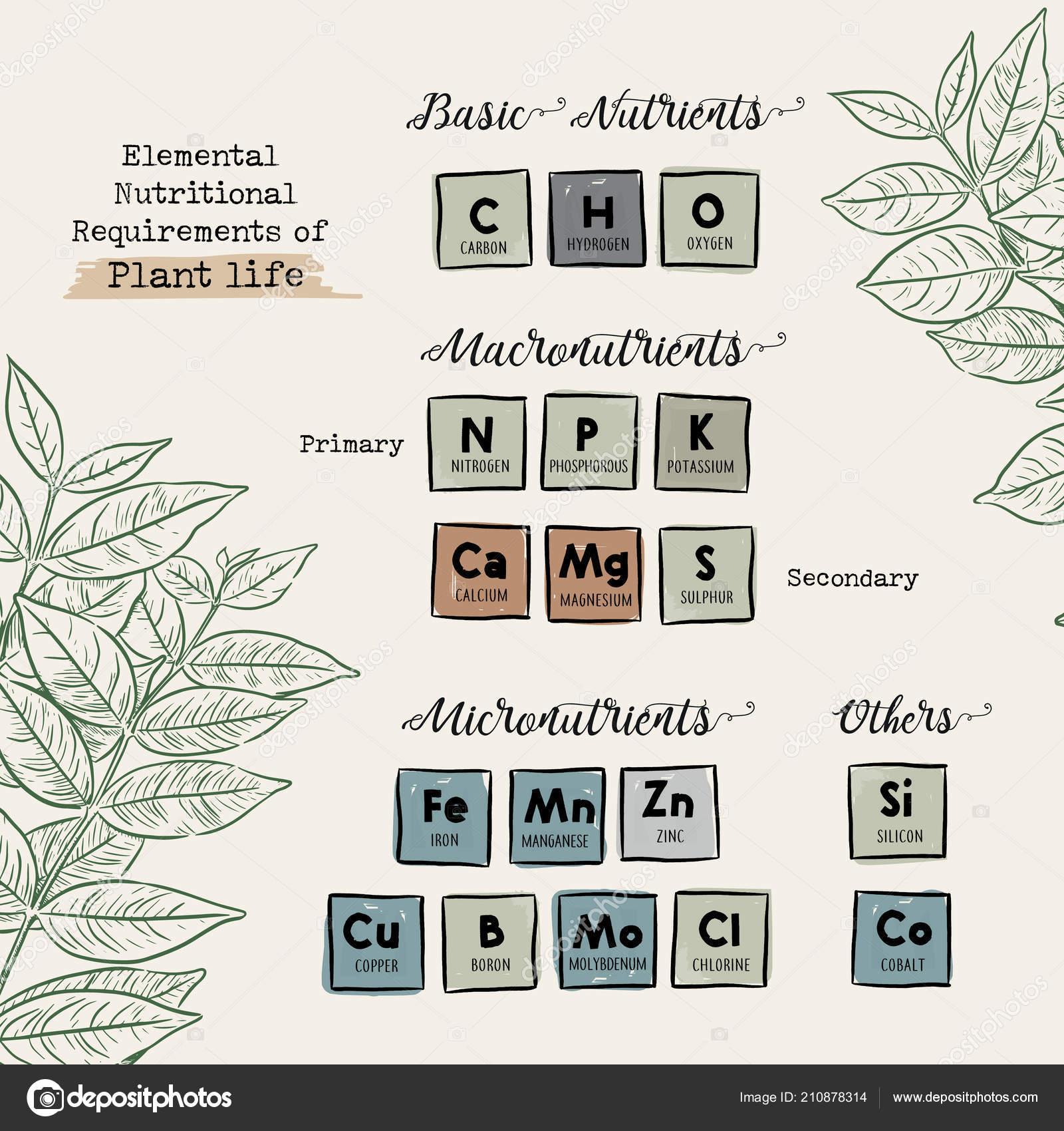 Elemental Nutritional Requirements Plant Life Hand Draw Chart Design Vector Stock Vector C Kirpmun Hotmail Com 210878314