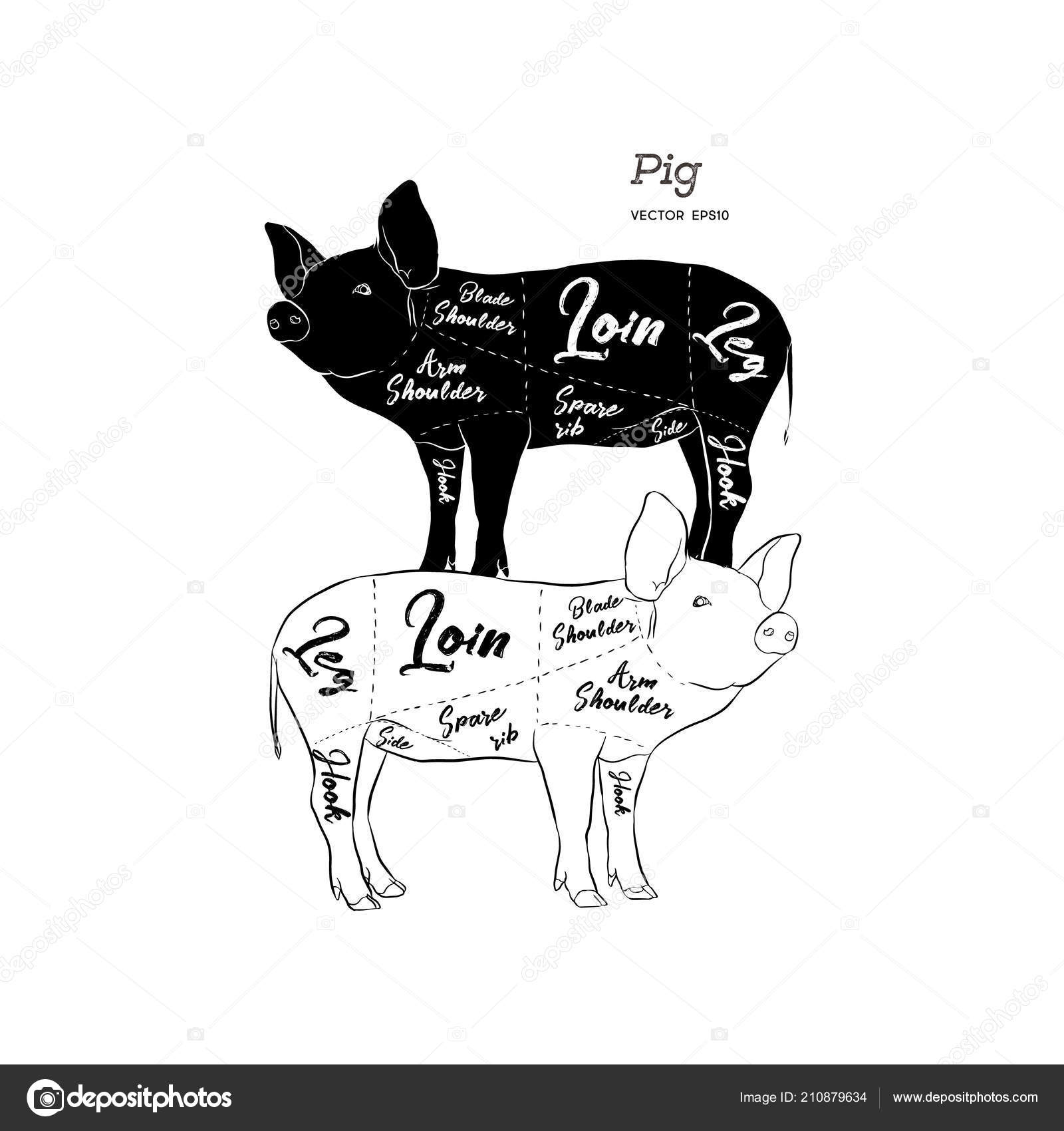 Cut Meat Set Poster Butcher Diagram Scheme Guide Pork Vintage