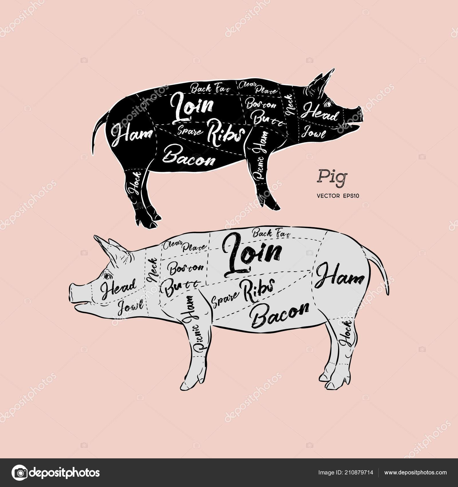 Cut Meat Set Poster Butcher Diagram Scheme Guide Pork Vintage Pig Stock Vector