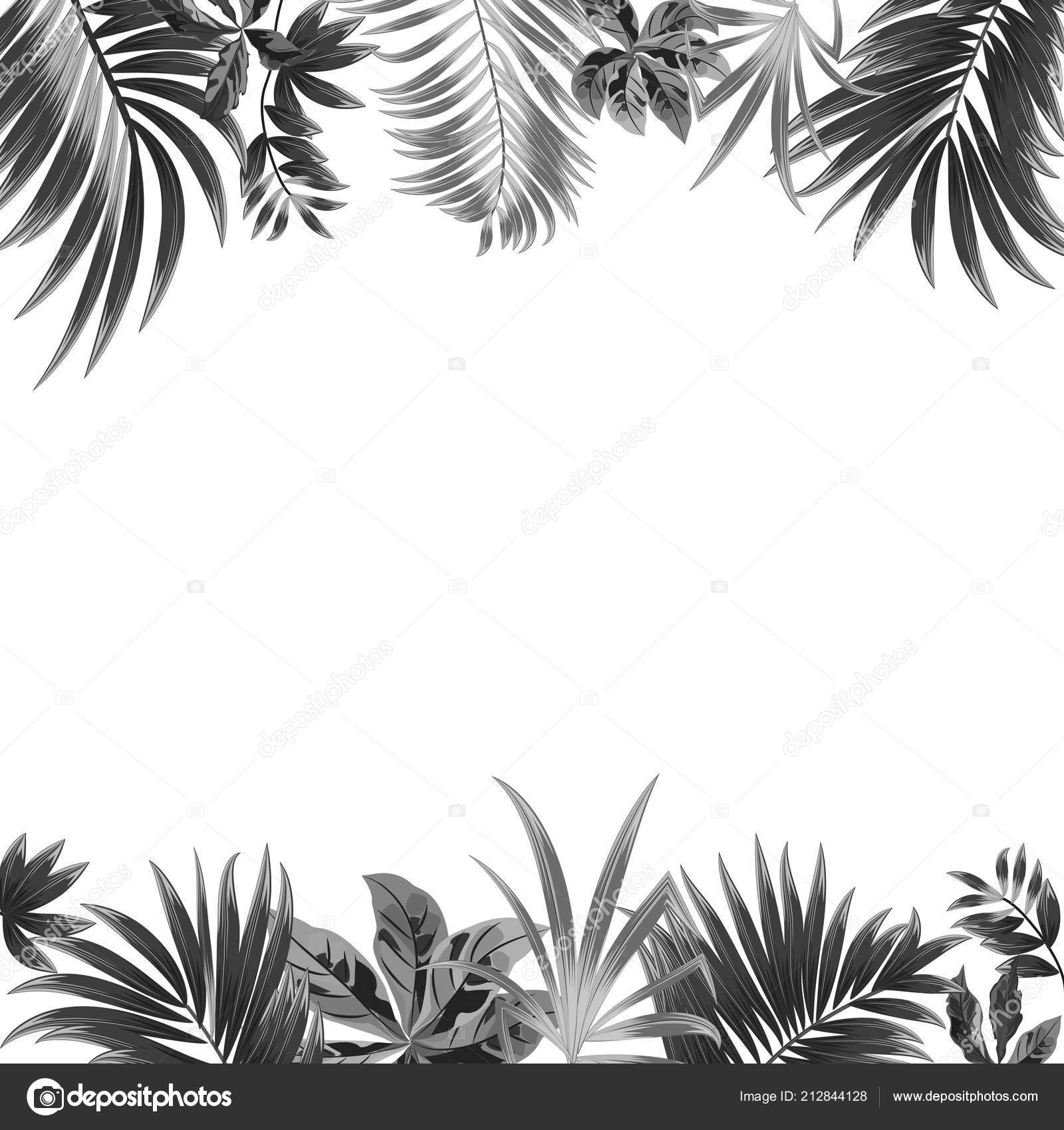 Vector Tropical Jungle Background Palm Trees Leaves White ...