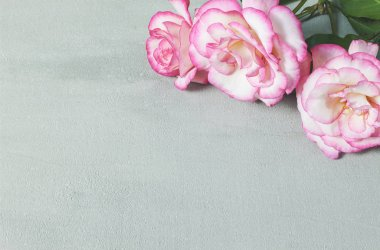 Background with fresh rose flowers and empty place for your text