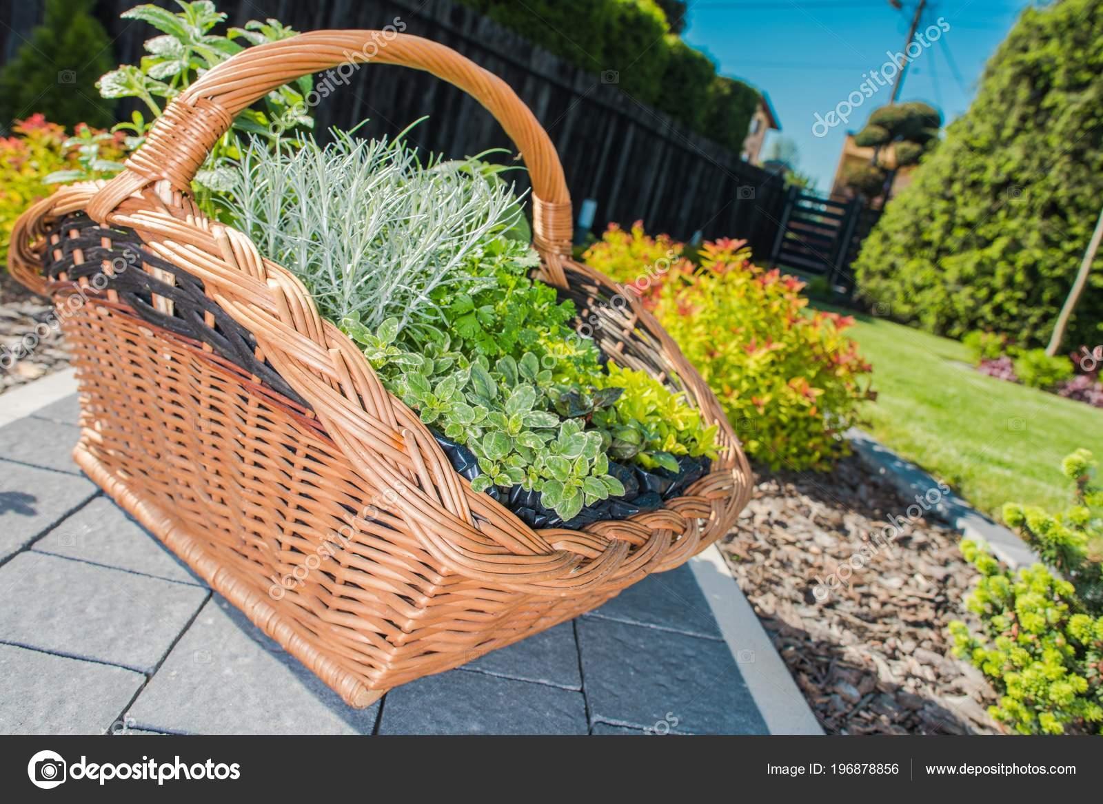 Elementi Decorativi Da Giardino : Cestino vimini pieno piante elemento decorativo del giardino tema