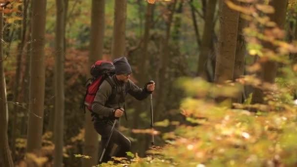 Túrázó, a séta az erdőben, a lassított felvételeket hátizsák.