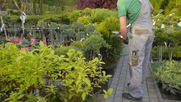 Kertész asztalosipari növényeket a kerti tárolóban