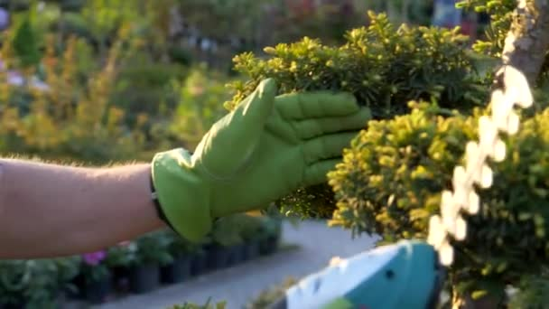 Topiary rostliny ořezávání pomocí zahradník detailní zpomalené