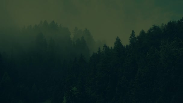 Spooky Foggy Forest in Dark Greenish Color Grading  Creepy Forest with  Moving Fog Video Backdrop