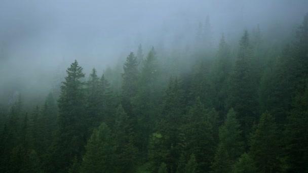 Malebný jehličnaté lesy pokryté pozdní odpolední bouřková mračna.