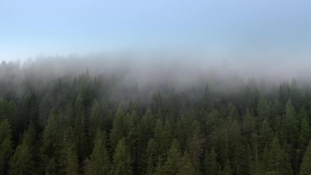 Vzdušný záběr jehličnanů a mraky kolem. Alpské počasí.