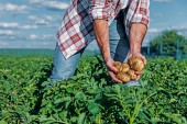 částečný pohled člověka s bramborami v rukou v oblasti