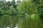 festői kilátás zöld fák nyugodt tó partján