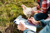 Fotografie partial view of female farmer holding chicken while her boyfriend making notes in clipboard outdoors