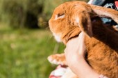 Fotografie cropped image of woman holding adorable brown rabbit outdoors