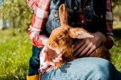 Fotografie cropped image of woman holding furry brown rabbit outdoors