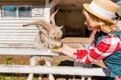 Photo woman in straw hat feeding goat by grass near wooden fence at farm