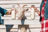 Photo cropped image of farmers showing glass bottles of milk while goat standing near wooden fence at farm