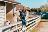 Fotografia donna attraente con la bottiglia di latte che si siede sulla rete fissa di legno e alimentazione capre da erba presso azienda agricola