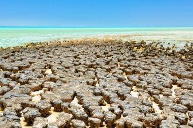 Stromatolites at Hamelin Pool - Denham