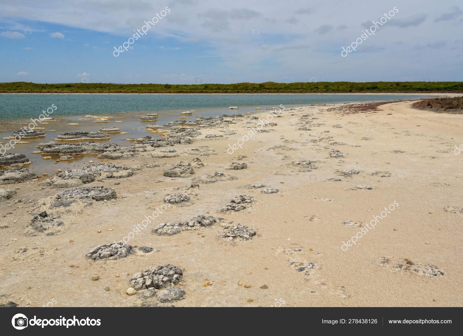 Stromatolites - Lake Thetis — Stock Photo © lkonya@optusnet