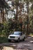Fotografia camioncino bianco sul sentiero nella foresta con gli alberi di pino