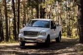 bílý pick-up v podzimním lese borovic