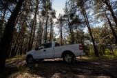 Fotografia vista laterale del camioncino bianco nella foresta piena di sole