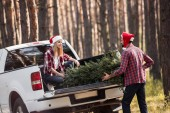 young couple in santa hats carrying fir tree for christmas into pickup truck in forest