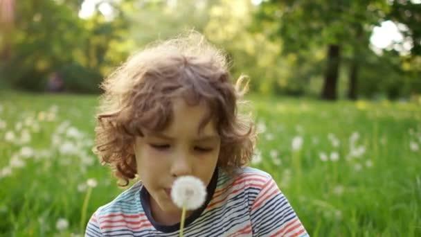Roztomilý kluk s kudrnatými vlasy fouká Pampeliška na pozadí letní zelené glade. Dynamické video. Den dětí