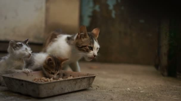 Two homeless kittens eat cat food. The problem of homeless animals in Eastern Europe, animal shelter, adoption