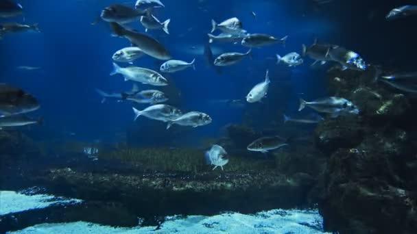 wunderschönes Fisch-Ozeanarium, Tiefsee-Weltpanorama, verschiedene Wassertierarten schwimmen im großen Barcelona-Aquarium, Meerblick mit natürlichen Lichtstrahlen, durch das Wasser leuchtend.
