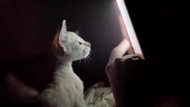 Kíváncsi cica keres a tabletta és a következő az ujj mozgását. Kicsi ravasz kiscica-val ragyogó szőr játék-val smartphone érint képernyő.