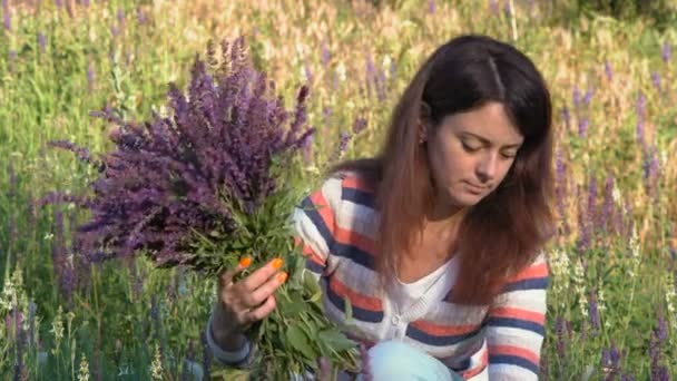 Close-up, Beautiful Woman Gathers Cornflowers Bouquet, Sitting Rips Field Flowers In the Morning in the Woods