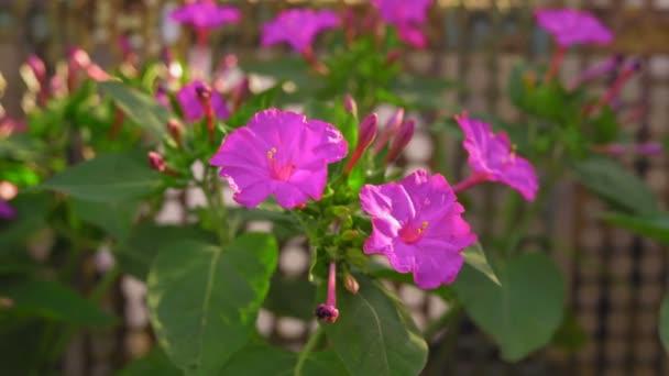 Detail volně žijící divoké květiny rostou blízko plotu