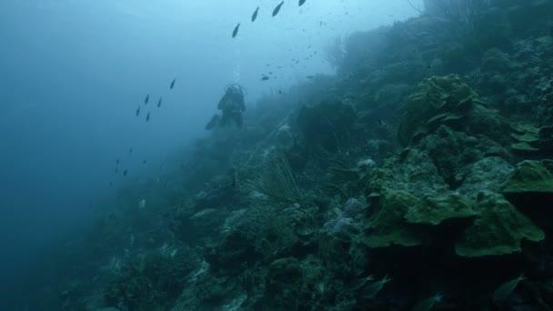 Scuba diver at Coral reef, underwater wide shot, Caribbean Sea, Bonaire