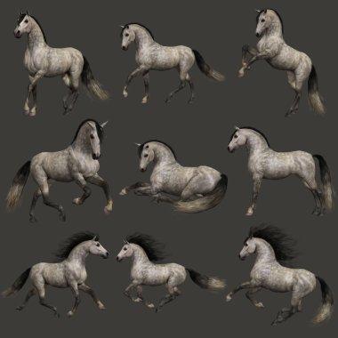 3d computer graphics of nine poses of a Dappel Grey horse