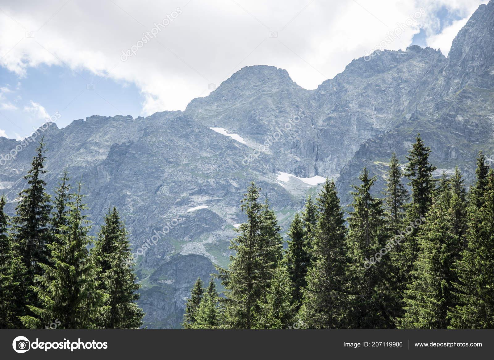 Mountain Landscape Trees Foreground Bright Mountains Card Stock Photo Image By C Elenaruban Ua Fm 207119986
