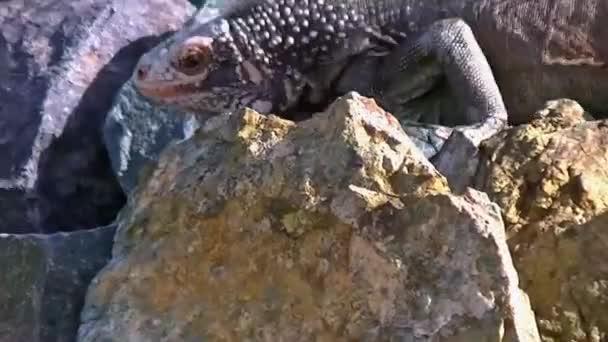 видео ящерицы и картинки