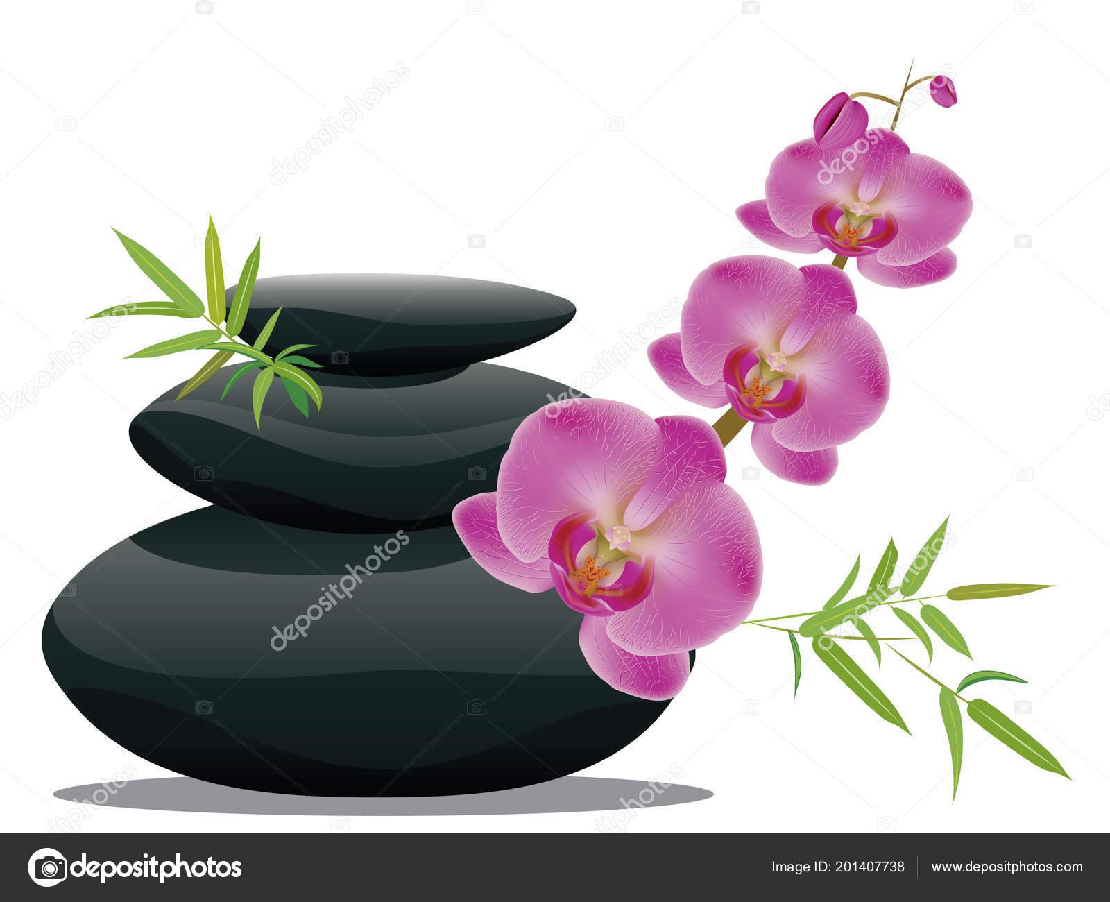 Negras Piedras Zen Monton Flores Orquideas Vector De Stock