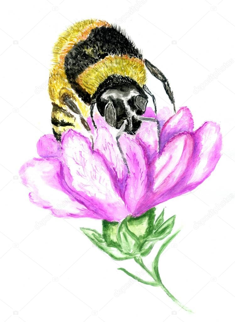 Yellow honey bee hand drawn watercolor illustration.