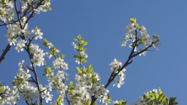 Fák a kertben virágzó fehér virágok
