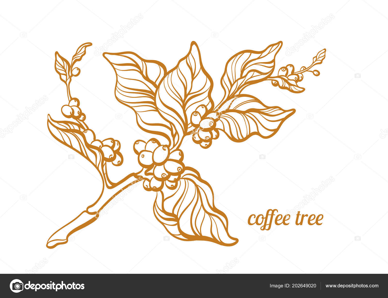 Vector Coffee Branch Leaf Coffee Beans Botanical Art Line Drawing