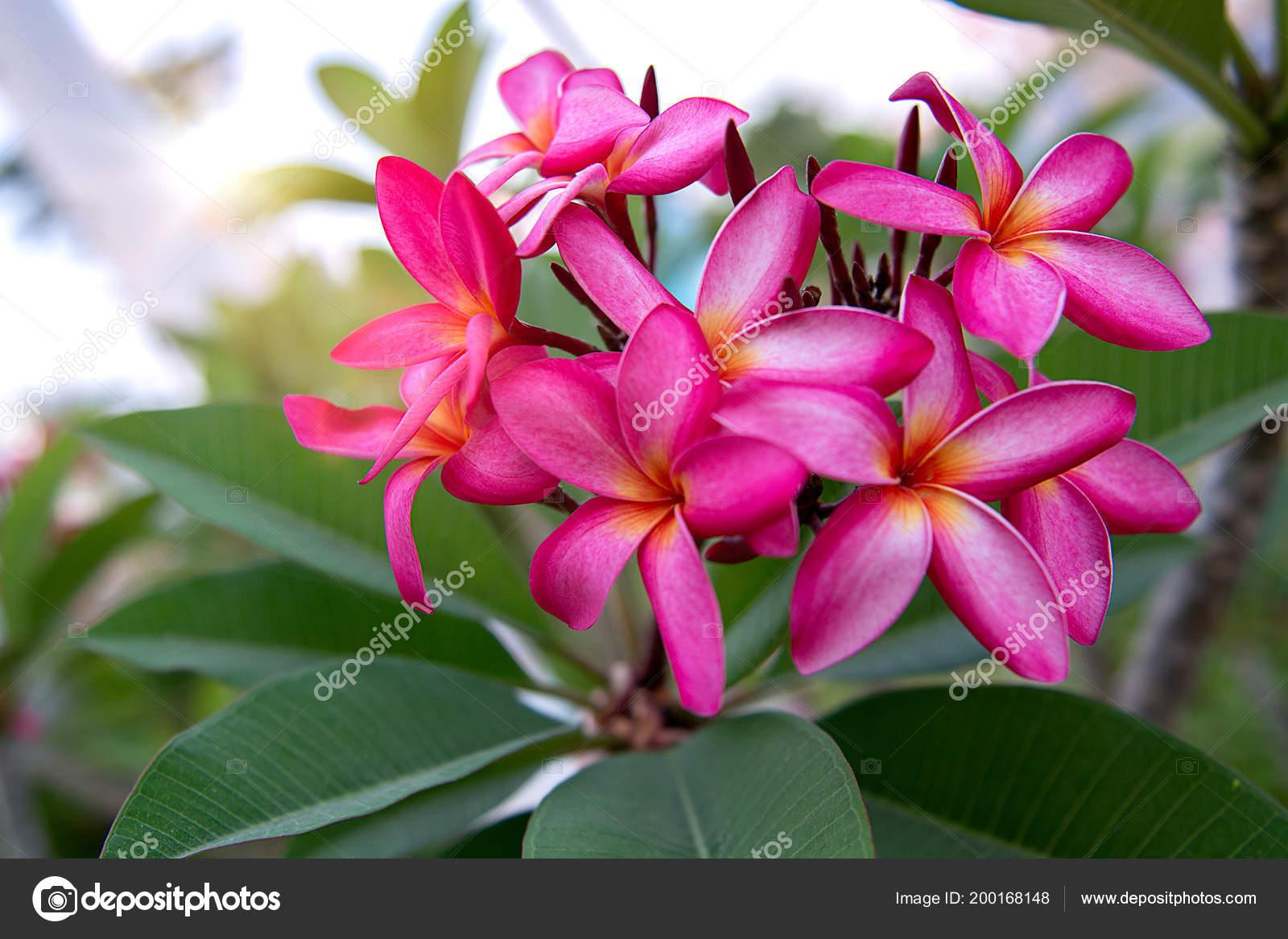 Beaucoup De Belles Et Colorees Des Fleurs Qui Poussent Dans Les