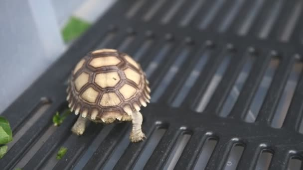 closeup view of cute turtle animal