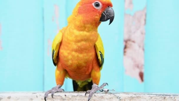 zaostřená pohled na barevný papoušek na tyči