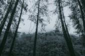 Abstract,Dark night tree background. beautiful wallpaper.