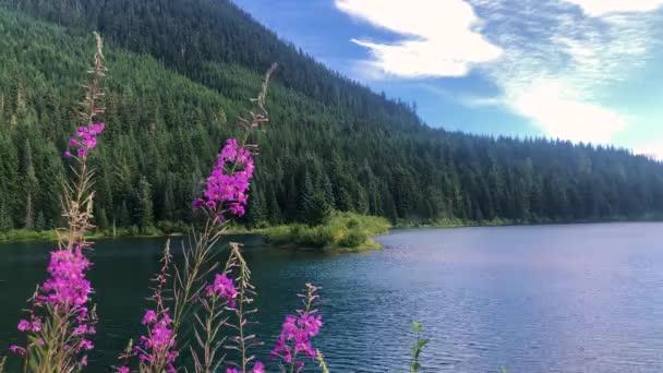 Klidné jezero s kvetoucími divokými květy v kaskádových horách