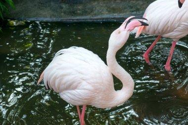 Pink flamingos in zoo during daytime