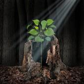 Fotografie Věřte a koncept víry jako paprsek světla svítí shora na stromek rostoucí z uschlého stromu jako naděje a spiritualita myšlenka ve stylu 3d obrázek