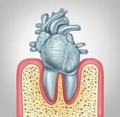 Zubní péče nebo ústní zdraví a onemocnění srdce koncept hygieny, které jsou způsobené zub plaku a žvýkačky infekce způsobené bakterií v ústech poškozují ventily jako zuby ve tvaru jako kardiovaskulární varhany jako 3d ilustrace.