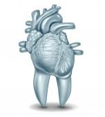 Ústní zdraví a onemocnění srdce Hygienická koncepce způsobené zubní plak a nácvik v důsledku bakteriální infekce dutiny ústní, poškození ventilů jako zub tvarovaný jako kardiovaskulární varhany jako 3d obrázek.