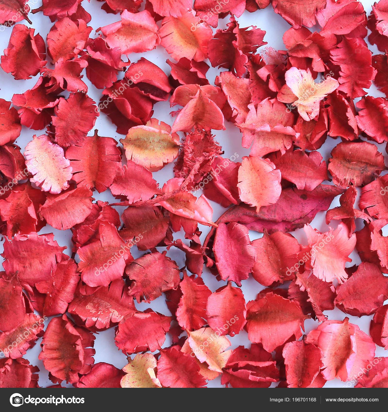 Fondo Pétalos Flores Secas Foto De Stock Civicdm At Hotmailcom